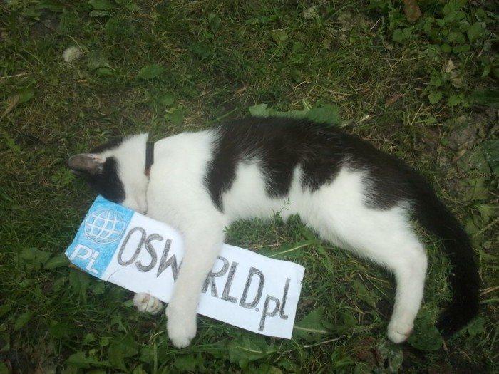 OSWorld.pl na wakacjach II - kot na wakacjach